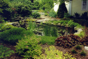 Free form water garden with oxygenating plants and adjacent patio seating.