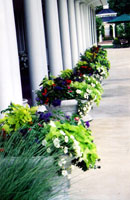 Allée of formal container gardens for continuous color (Manor House, Mason Oh).